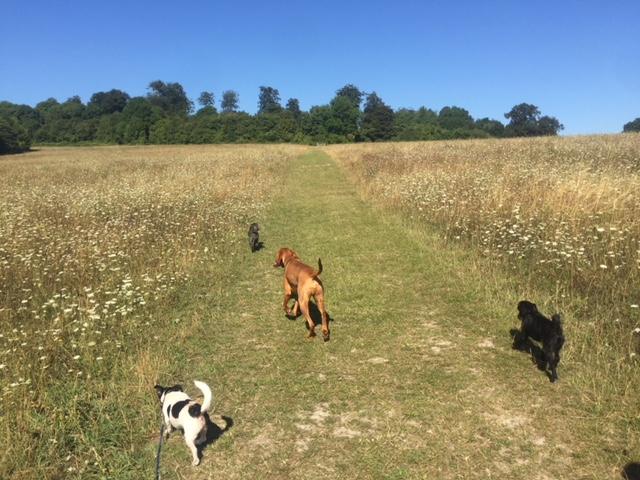 Dog Walking Tonbridge Kent